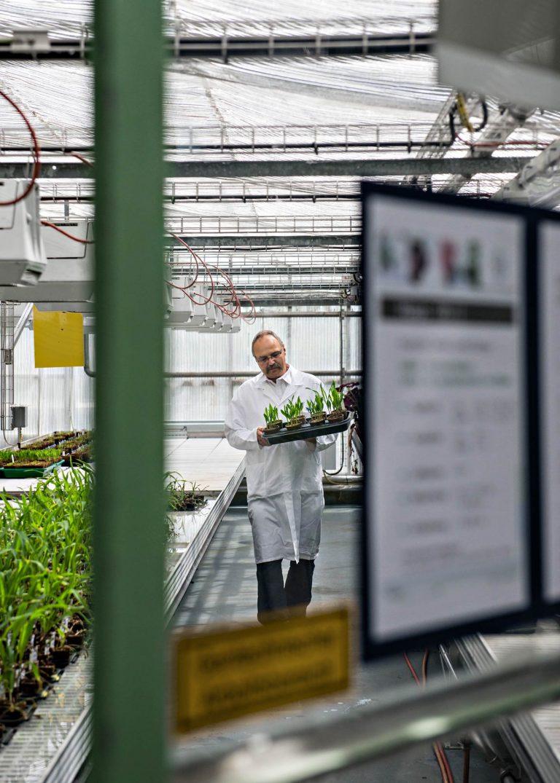 Businessportrait - Mann im Pflanzen-Labor