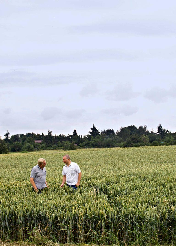 Zwei Männer stehen im Kornfeld