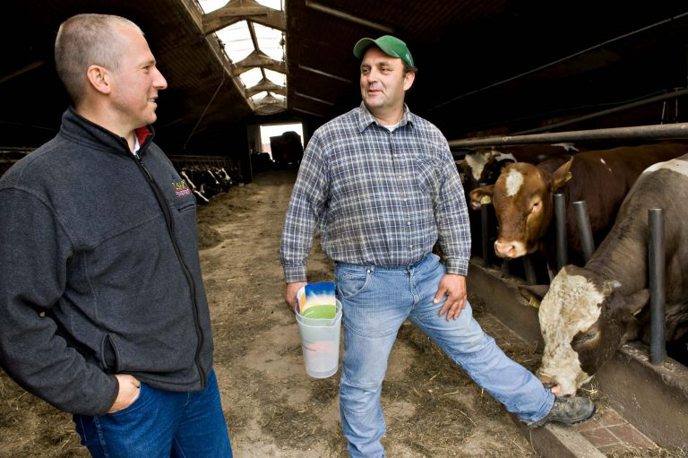Landwirt im Kuhstall